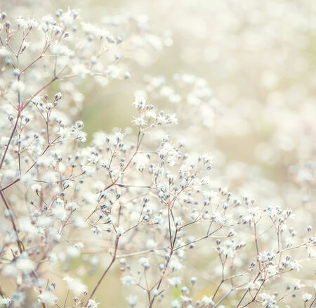 Pastel toned flowers  Stock Photo