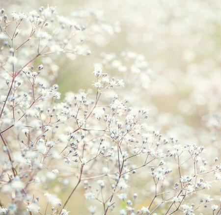 Pastel toned flowers  Standard-Bild