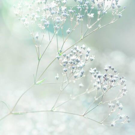 pastel colors: Pastel toned flowers