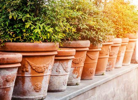 ollas de barro: ollas de barro con plantas Foto de archivo