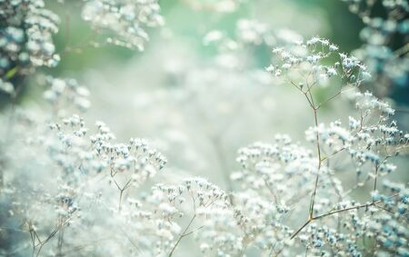 shallow depth of field: Pastel toned flowers