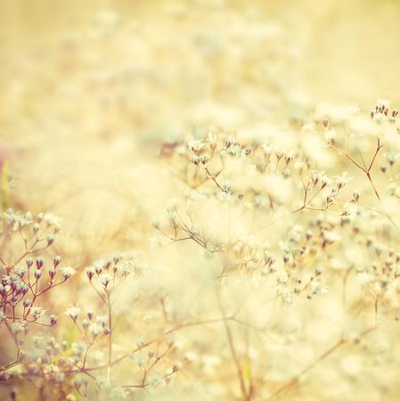 petites fleurs: fleurs aux tons doux Banque d'images