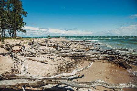 Fallen tree with roots on the beach Stock Photo
