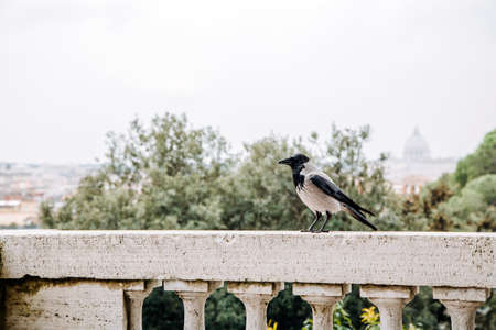 A bird sitting on the balustrade with panoramic view at the city. Rome, Italy.
