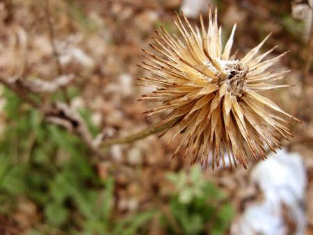 A dead stinging nature.