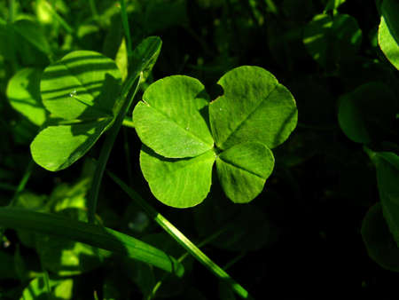 A little green lucky four-leaf clover.