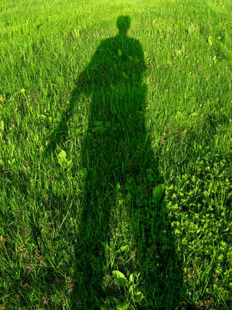 symbiosis: A mysterious verdant shadow on sunny and alive grass. Stock Photo
