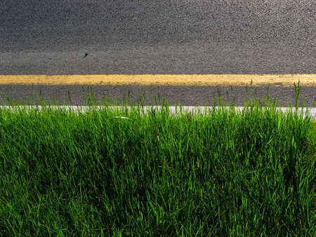 demarcation: Green grass delimited by a desert asphalt. Stock Photo