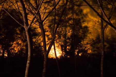 Wildfire at night Standard-Bild