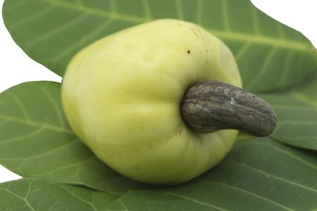 cashew tree: Cashew fruits on Leaf a white background