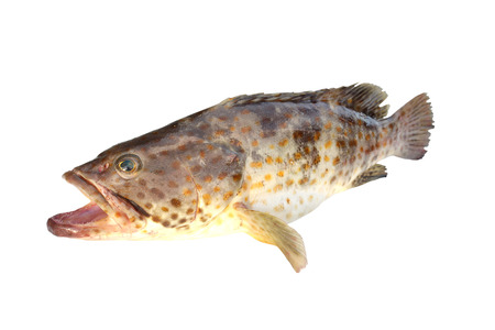 Grouper Fish isolated on white, Fish is cooking and Expensive.