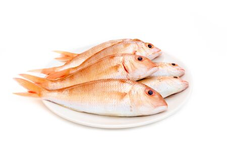 Fresh red snapper fish  on white background. Imagens