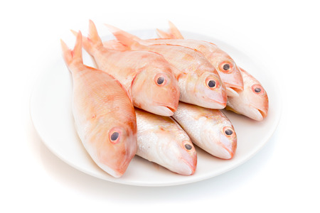 Fresh red snapper fish  on white background. Stock Photo