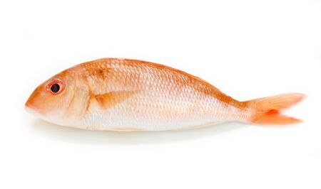 Fresh red snapper fish on white background.