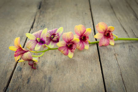 cleave: Orchid vintage on wooden background. Stock Photo