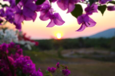foreground: sunset blurred view of flower foreground