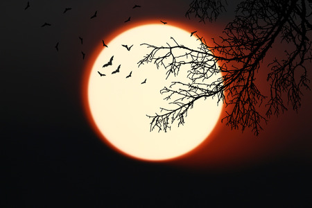 Halloween background. bat forest with full moon and dead trees.