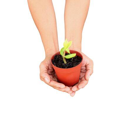 nurture: tree pot in hand on white background. Stock Photo