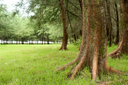 tree in field: Green park with lawn and big trees. Stock Photo