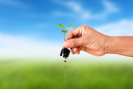 Human hand holding little tree with soil on blurred colorful grean grass.