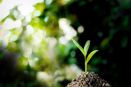 little plant seedling growing on fertile soil .