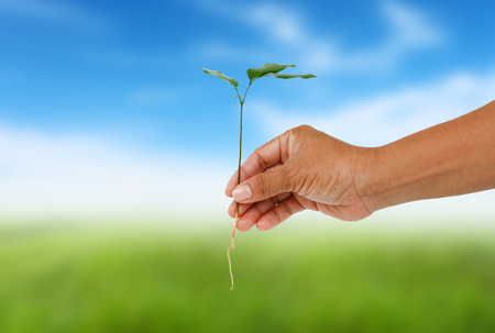 Human hand holding little tree on blurred colorful green grass. Stock Photo
