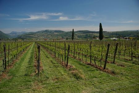 monticchiello: Veneto region wineyards near lake of Garda in Italia Stock Photo