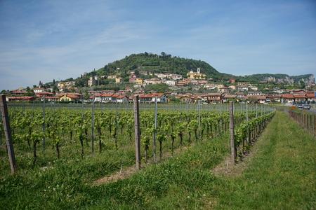 veneto: Veneto region wineyards near lake of Garda in Italia Stock Photo