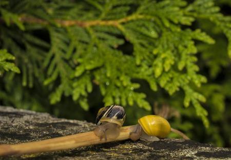 A snail on a stone. Stock fotó