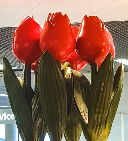 Red Wooden Tulips flowers in Schiphol airport. Stock Photo