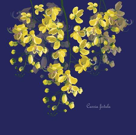 Cassia fistula flower symbol of Thailand
