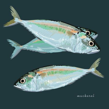 mackerel fish illustration vector format