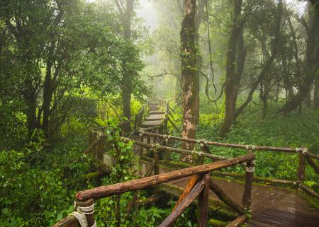 도이 인 타논 국립 공원, 치앙마이 스톡 콘텐츠