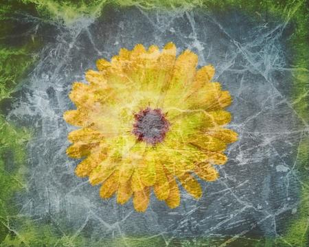 calendula: Calendula flower on grunge background Stock Photo