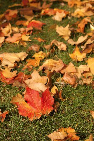 red yellow orange fallen leaves in autumn 免版税图像