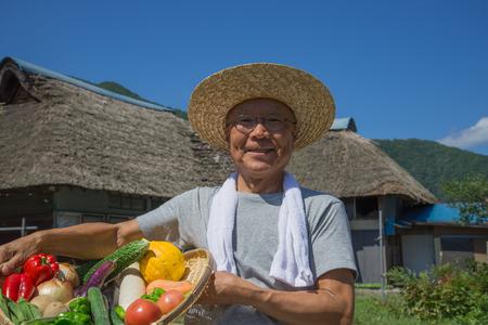 シニア日本野菜を収穫するには 写真素材