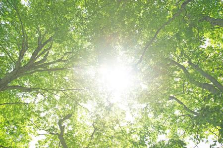 ブナ森の緑 写真素材