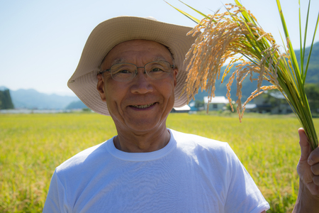 See the growth of the rice farmer SR.