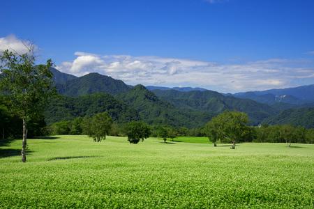 Wysokie pole gryczane w Japonii