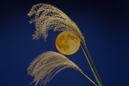 Autumn images sky and full moon