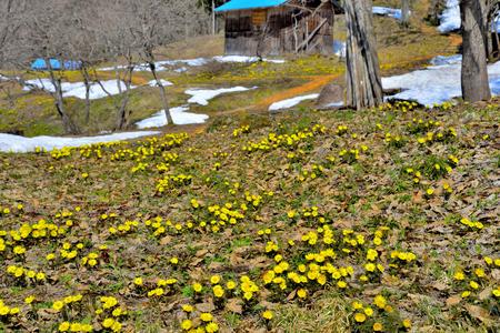 Spring Adonis Foto de archivo - 89252010