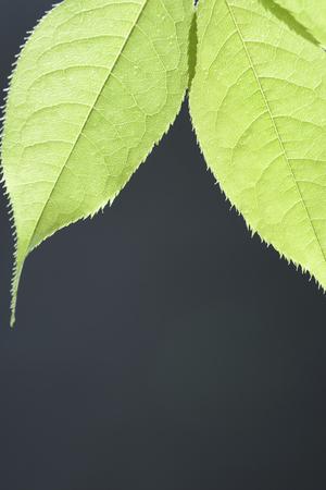 Fresh green leaf 免版税图像