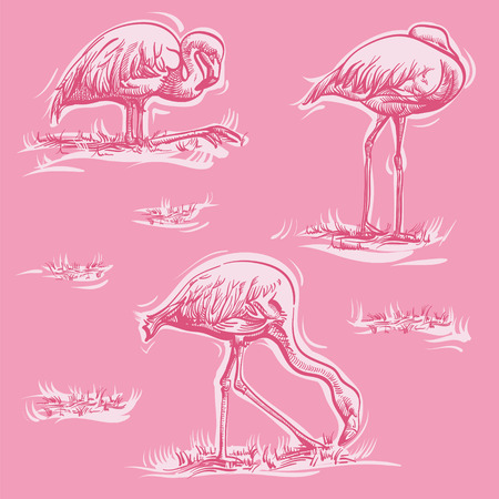 Three flamingos in different positions