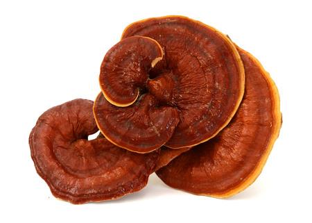Ganoderma mushroom over white background