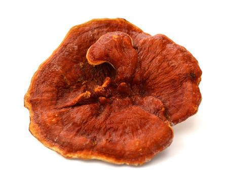 Lingzhi Mushroom Isolated on white .. Stock Photo