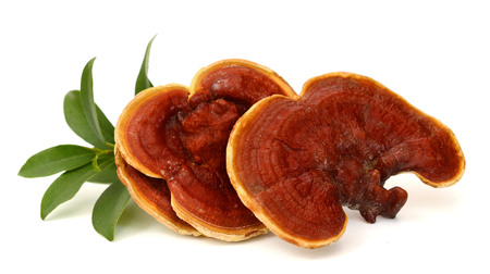 Ganoderma Lucidum. isolated on .. Banque d'images
