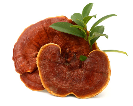 Ganoderma Lucidum. isolated on .. Stock Photo