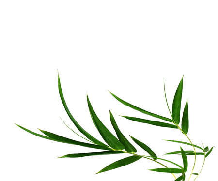ch: Bamboo leaves isolated on white ..