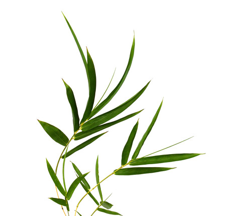 bamboo leaves isolated on a white ..