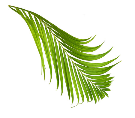 green palm leaf more in my portfolio Stock Photo